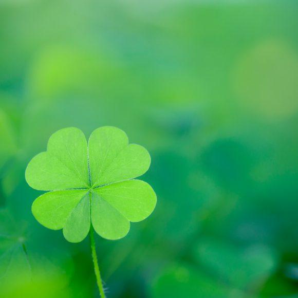 four_leaves_clover