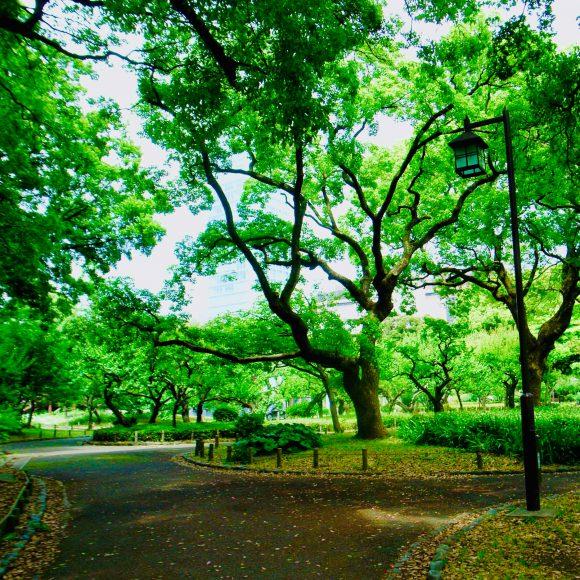 Shibapark