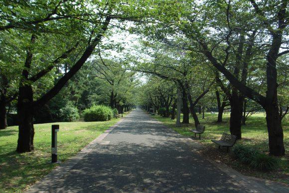 YumenoshimaGreenway